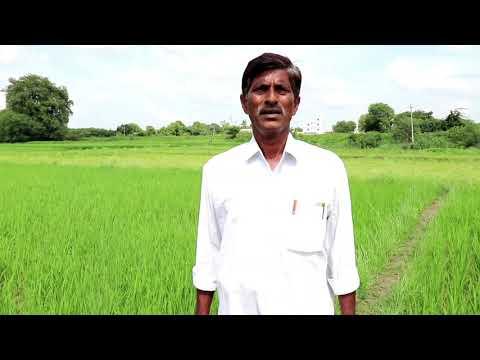 తెలుగు వేస్ట్ డికోమ్పోజర్ నేషనల్ సెంటర్ Telugu Waste decomposer farmer P. Ravindranath, 09505897596
