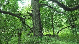 Jak mierzy się lasy? Ile jest martwego drewna?