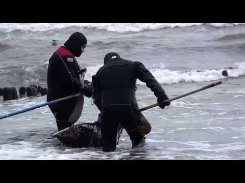Янтарь  Море  Люди