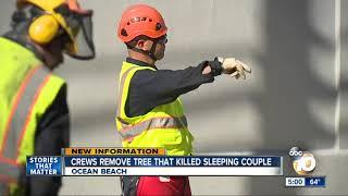 Crew remove tree that killed sleeping couple in Ocean Beach
