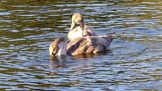 Woodland Waters  Grantham England Lake Beautiful Place to Visit
