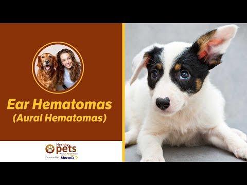 Ear Hematomas (Aural Hematomas)
