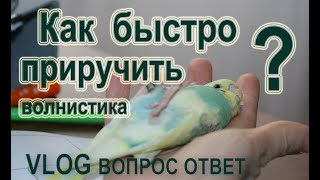 📚 ✉ Как быстро приручить волнистого попугая к рукам? 👌