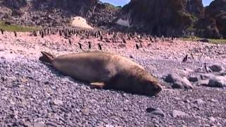 Az élet fagyos szigete-Antarktisz / 3.rész A jégvilág titkai