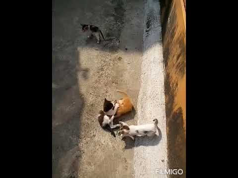 Funny cats fighting...