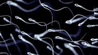 Spermien vergiften Konkurrenten und machen sie orientierungslos