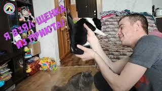 Милота зашкаливает Котенок и щенок из приюта поехали домой animal shelter