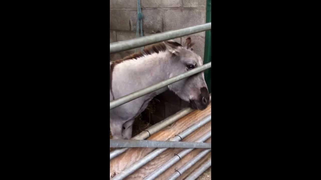 Reddish Vale Farm Holly Feeding Animals Xxx - Youtube-1183