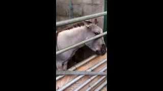 Reddish vale farm. Holly feeding animals xxx