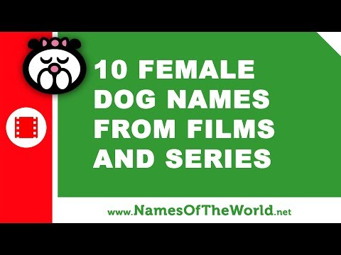 10 female dog names from films and series - the best pet names - www.namesoftheworld.net