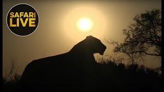safariLIVES Episode 21