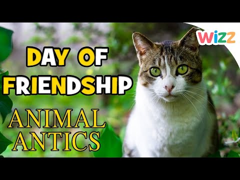 Animal Antics - Day of Friendship Special | Play Time with the Kittens