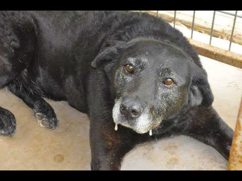 after-this-dog-was-returned-to-a-shelter-twice,-a-rich-heiress-sent-a-jet-to-bring-her-home