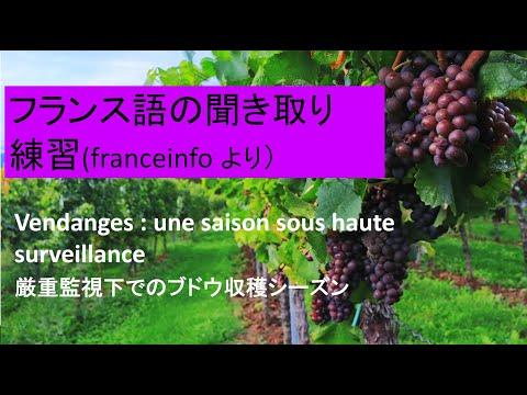 フランス語の聞き取り練習:厳重監視下でのブドウ収穫シーズン(Vendanges : une saison sous haute surveillance)