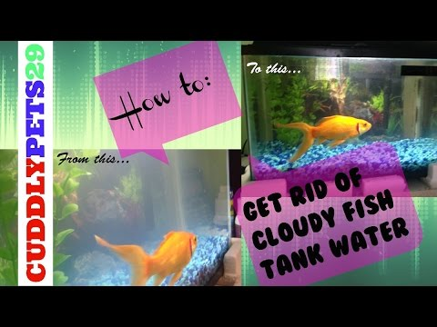 How To Get Rid Of Cloudy/milky Aquarium Water
