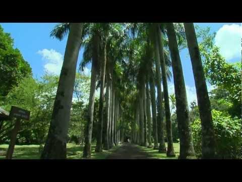 Ile Maurice : jardin de Pamplemousse