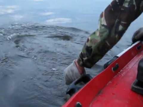 рыбалка на сома в беларуси на днепре