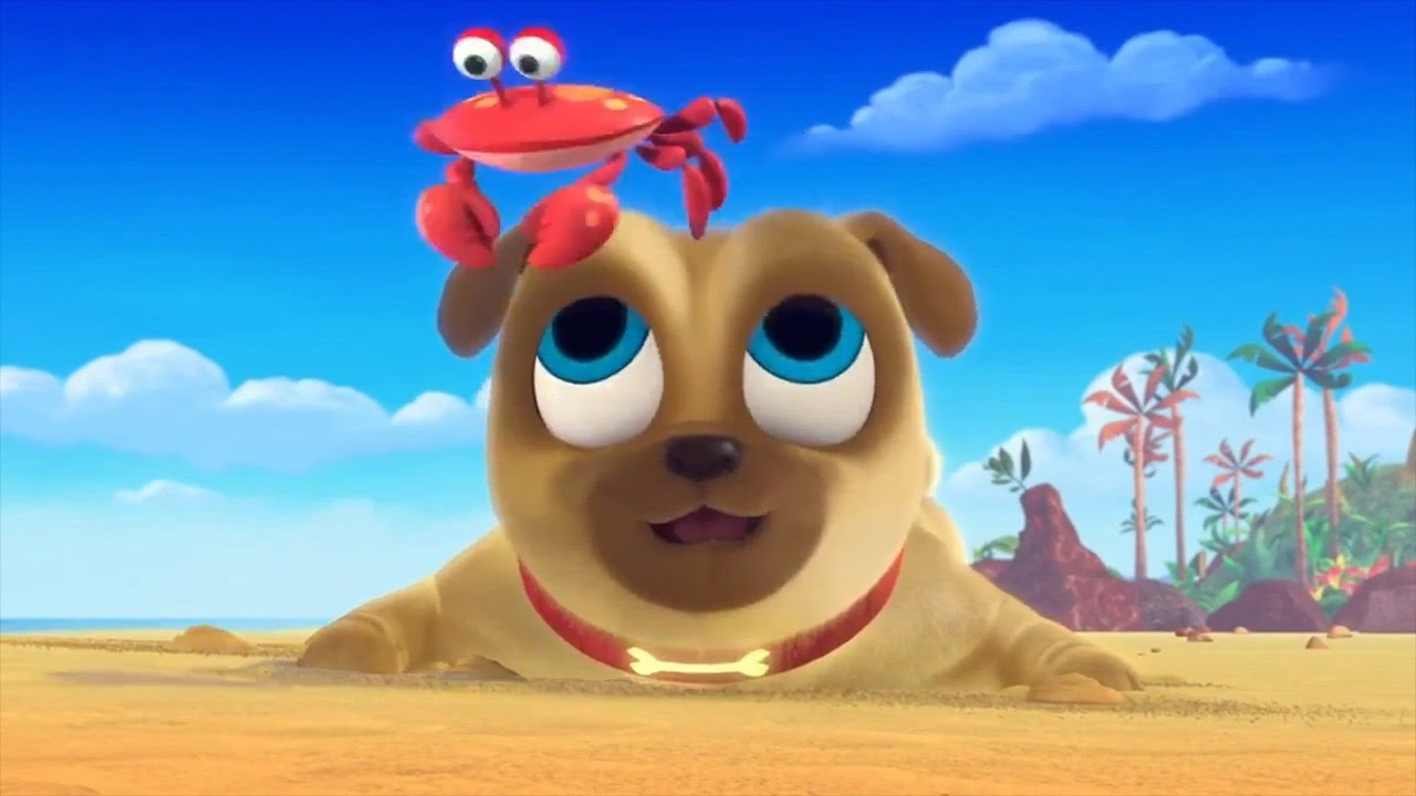 Bingo And Rolly Chase Crabs On The Beach In Hawaii Puppy Dog Pals