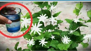 153 # mogra plant ki caring tips hindi mein.