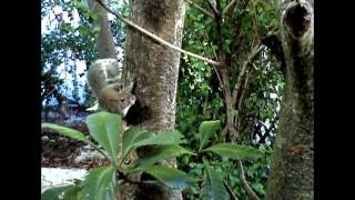 When Squirrel Meets Bird Feeder (with Music, Very Funny!)