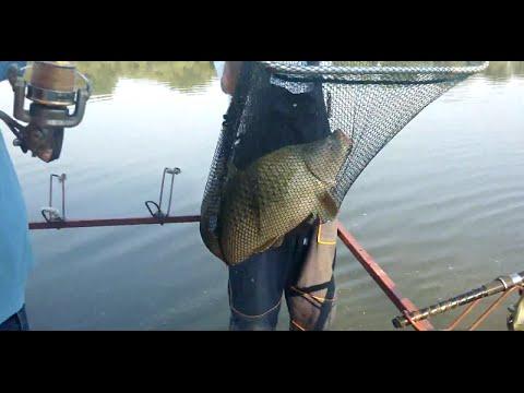 Pecanje Sarana na Savi od 10 kg Umka - YouTube