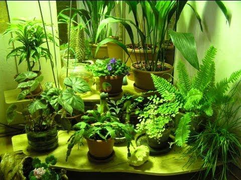 зимний сад дома своими руками фото