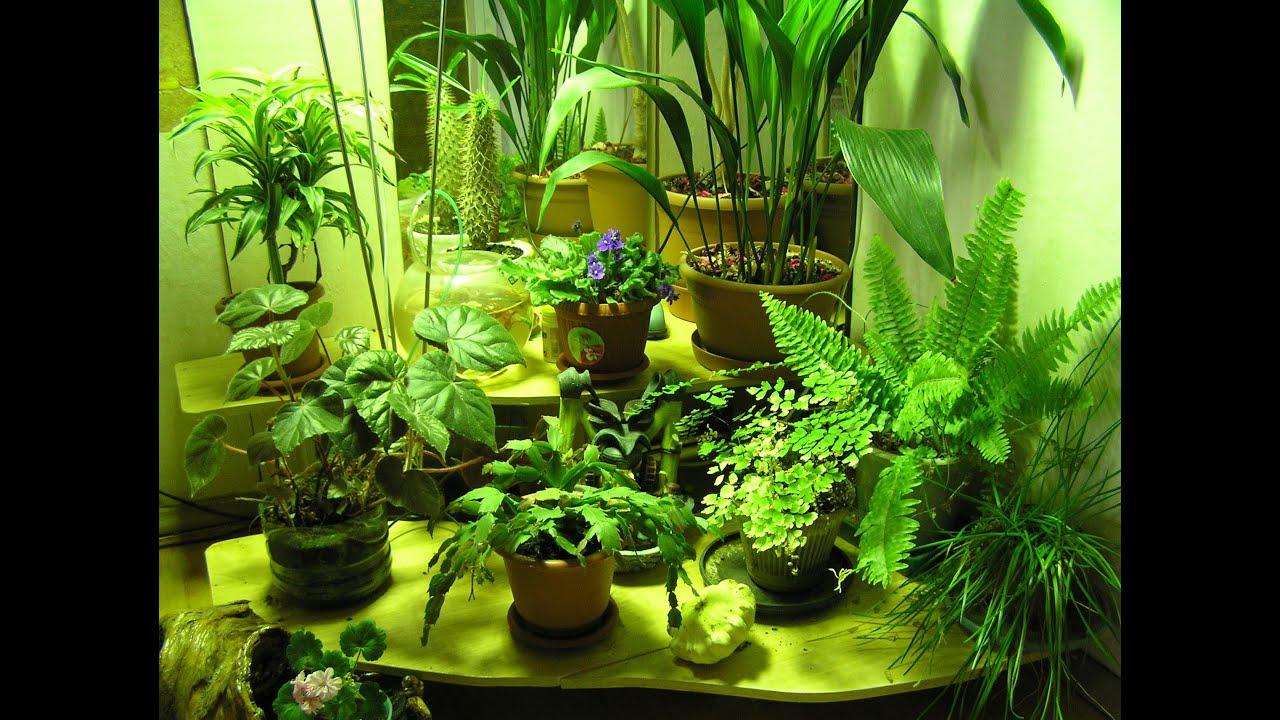 Зимний сад в квартире своими руками фото 173