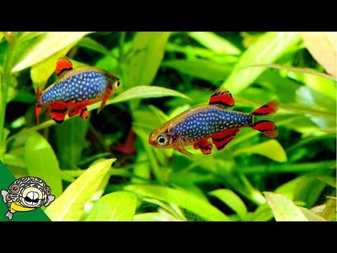 FUN Ideas For Your 20 Gallon Fish Tank.