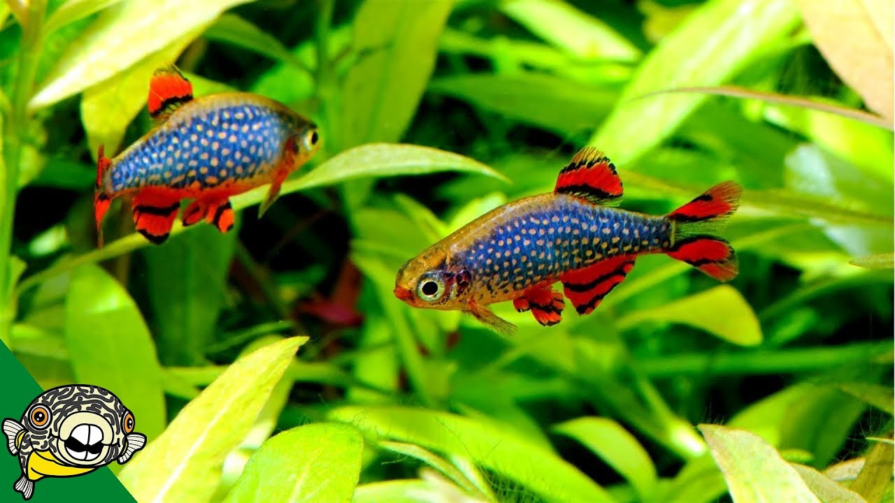 Fun Ideas For Your 20 Gallon Fish Tank Youtube