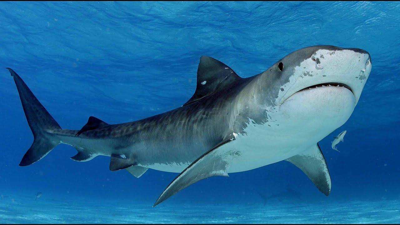 Submarine Shark Caught On Tape Off Coast Of Cape Town