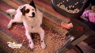 Dog with a blog -- Sono proprio adatto a questo ruolo? - Dall