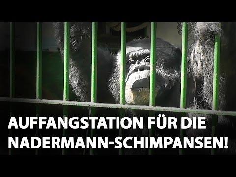 Auffangstation für die Nadermann-Schimpansen / PETA