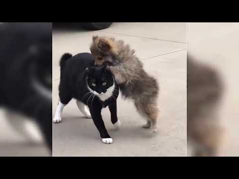Cats Are Cute but Fearless - Cats vs Dogs vs Birds Funny Fights
