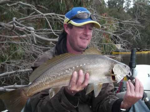 Bream flathead mulloway fishing with lures and bait for Best lures for river fishing