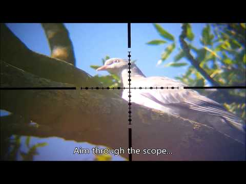 Air Rifle Hunting & Pest Control - May 2020