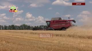 Уборка урожая в ДНР продолжается
