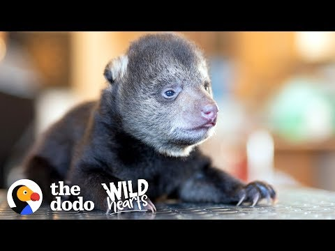 Tiniest Rescued Black Bear Cub Grows Up To Be CUTE | The Dodo Wild Hearts