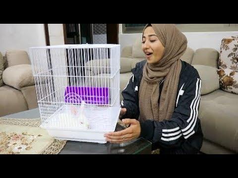 BIRTHDAY BUNNY (Palestine Vlog 2)