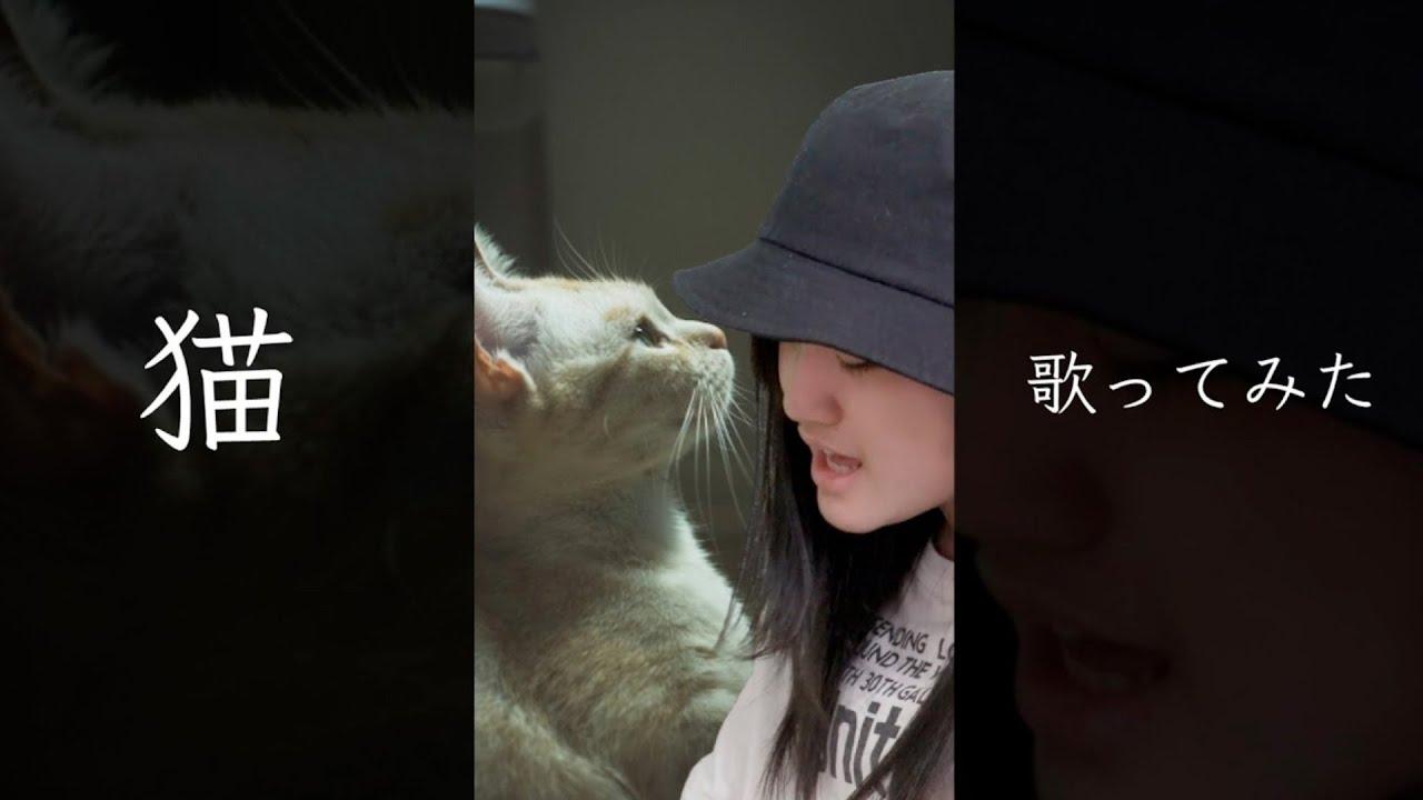 【あきぽん】猫 歌ってみた♪ #Shorts