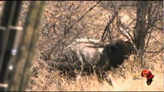 Molopo Kalahari Hunting 2010