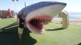 תאי פוגש כריש!