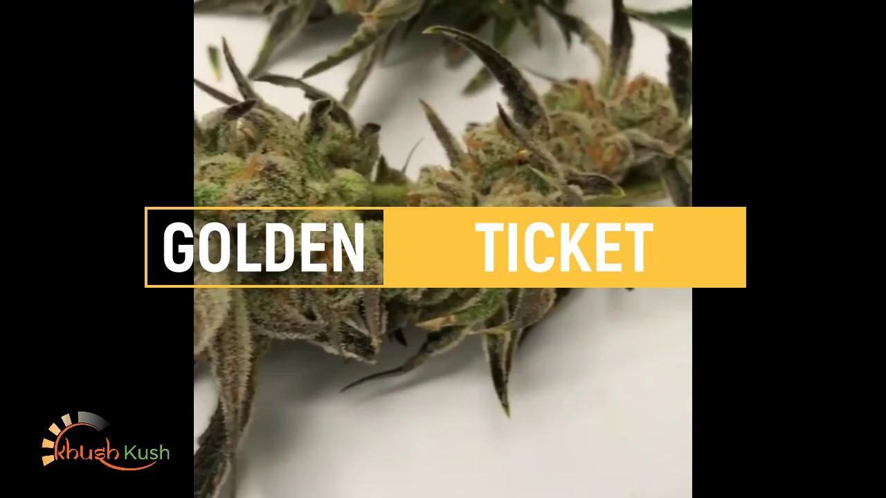 New Strain Coming! Golden Ticket