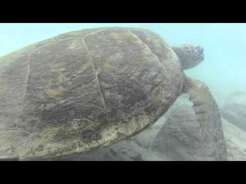 turtle.MOV