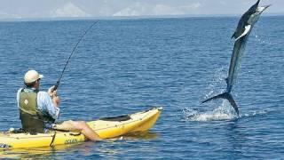 300 Pound Marlin Tows Kayak 11 MILES