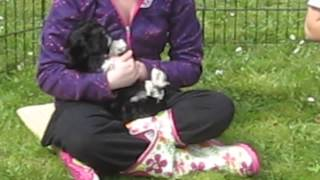 Puppy Training Session Outside In The Garden