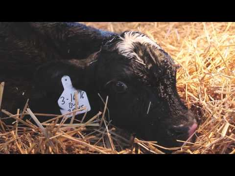 Made In The Tri-State: New Generation Dairy