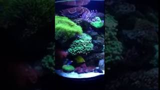 Saltwater 24 Gallon Current Cardiff Tank