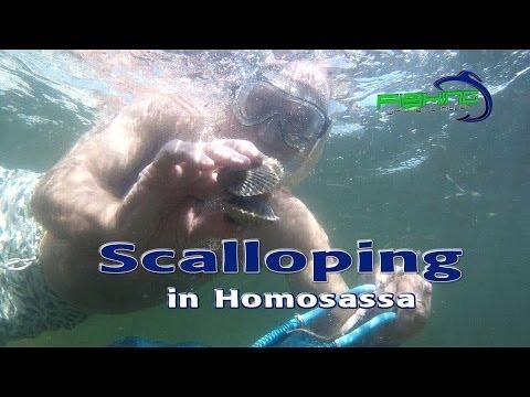 Scalloping Homosassa - Fishing With Bill Miller