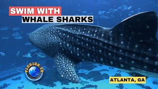 Swim With Whale Sharks Georgia Aquarium ATLANTA HD
