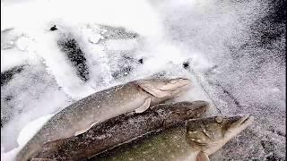 Перволедная рыбалка в Пестяках